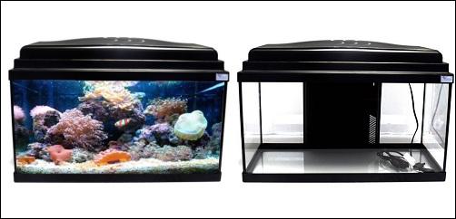 Aquarium Bermudes