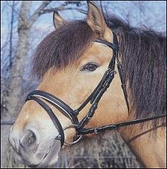 Bridon standard pour cheval