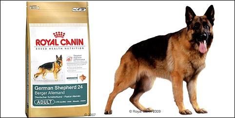 Croquettes chien Royal Canin pour berger allemand