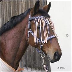 Kit pour cheval