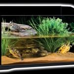Bac à tortue et amphibiens