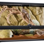 Terrarium en verre