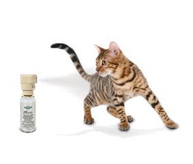 traceur gps spray r pulsif colliers pour le bonheur de vos animaux. Black Bedroom Furniture Sets. Home Design Ideas
