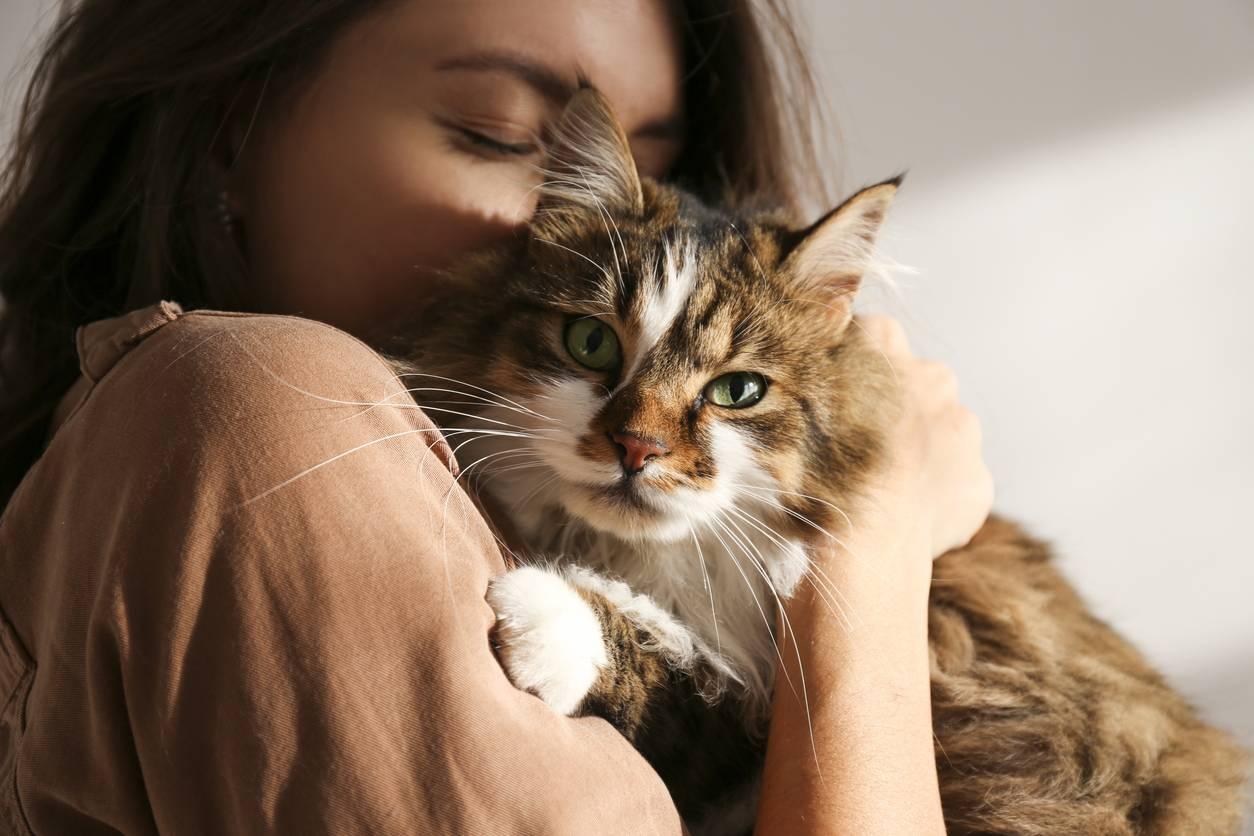assurance santé pour son animal de compagnie