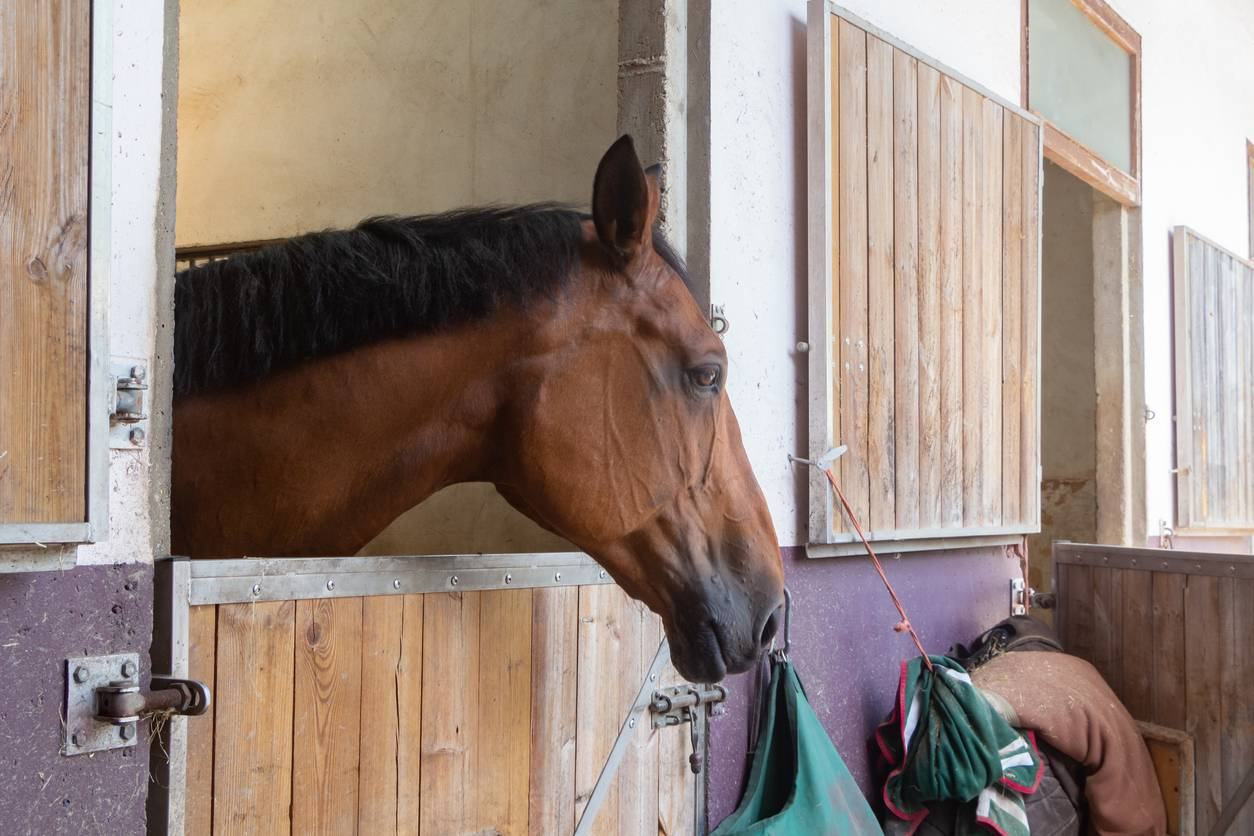 tenture de box cheval