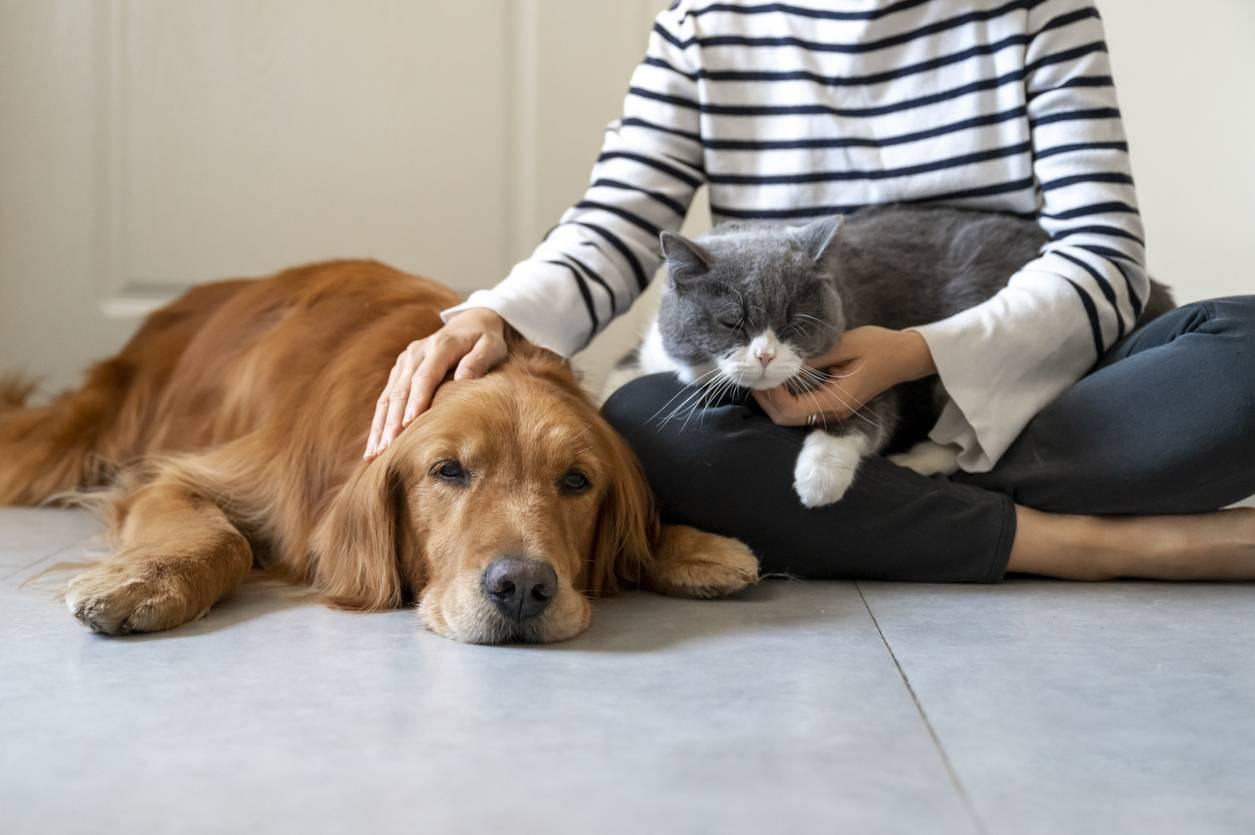 chien et chat, quelles races s'entendent le moins