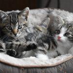 Les accessoires indispensables pour votre chat